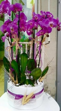 Seramik vazoda 4 dallı mor lila orkide  Sivas çiçekçiler