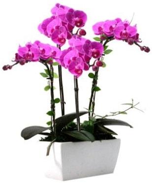 Seramik vazo içerisinde 4 dallı mor orkide  Sivas çiçek yolla