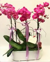 Beyaz seramik içerisinde 4 dallı orkide  Sivas çiçekçi telefonları