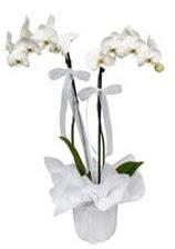 2 dallı beyaz orkide  Sivas çiçek servisi , çiçekçi adresleri
