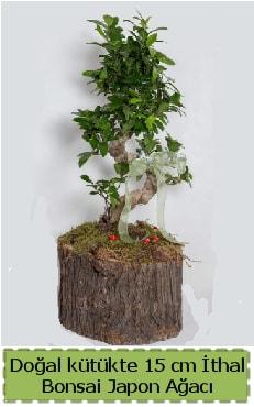 Doğal kütükte İthal bonsai japon ağacı  Sivas İnternetten çiçek siparişi