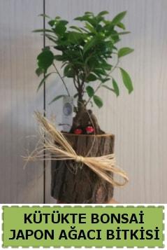 Kütük içerisinde doğal bonsai ağacı  Sivas çiçek gönderme sitemiz güvenlidir
