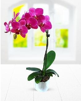 Tek dallı mor orkide  Sivas çiçek yolla