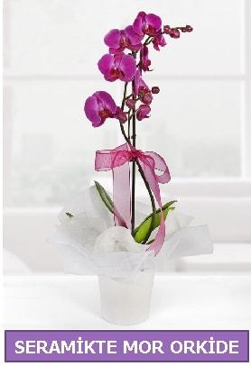 Seramik içerisinde birinci kalite tek dallı mor orkide  Sivas yurtiçi ve yurtdışı çiçek siparişi