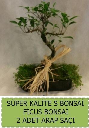 Ficus S Bonsai ve arap saçı  Sivas çiçek gönderme sitemiz güvenlidir