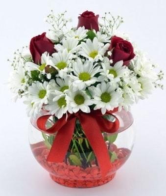 Fanusta 3 Gül ve Papatya  Sivas hediye çiçek yolla