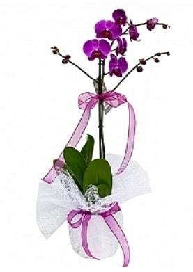 Tekli Mor Orkide  Sivas çiçek yolla , çiçek gönder , çiçekçi