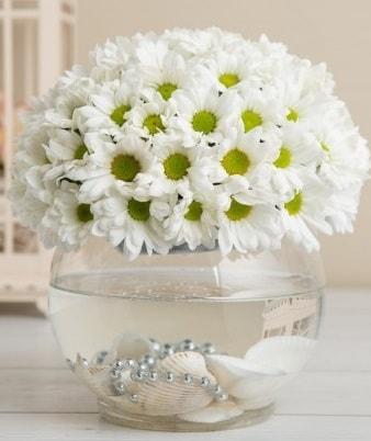 Fanusta beyaz Papatya  Sivas çiçek yolla