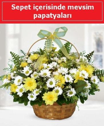 Sepet içerisinde mevsim papatyaları  Sivas çiçekçi telefonları