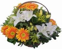Sivas kaliteli taze ve ucuz çiçekler  sepet modeli Gerbera kazablanka sepet
